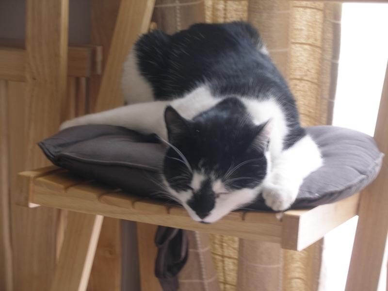 Αγγλό-γατες!!! - Σελίδα 5 P2030410