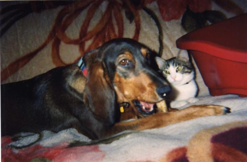 Lost Grek Hunting Dog Img00910