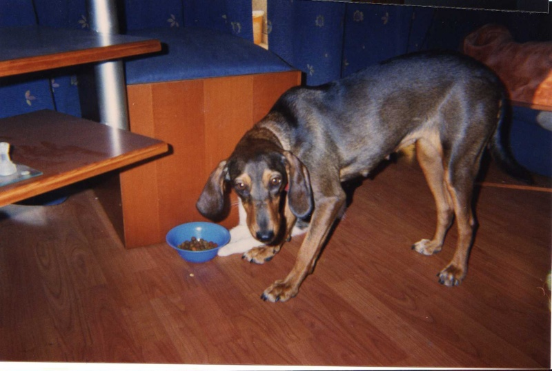 Lost Grek Hunting Dog Img01110