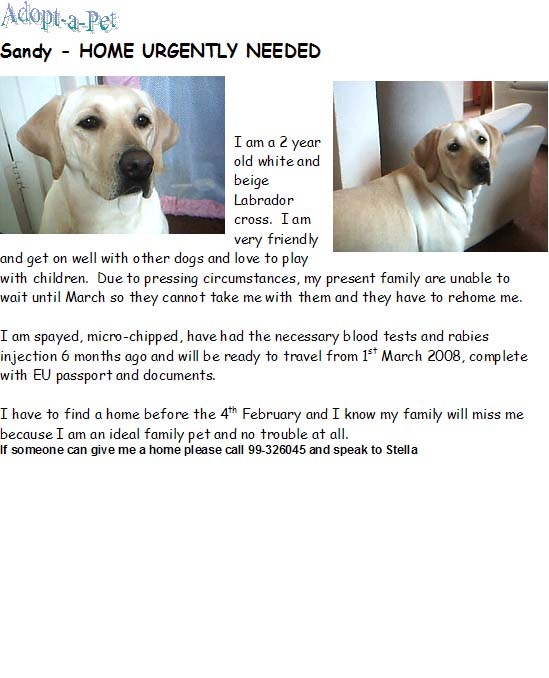 Rehomed - Lovely Labrador needs new home Sandy10