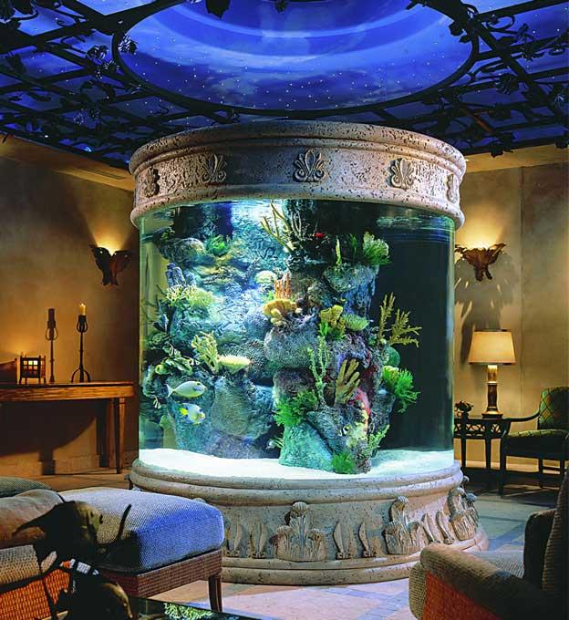 تشكيلات متنوعة من أحواض سمك الزينة 953210