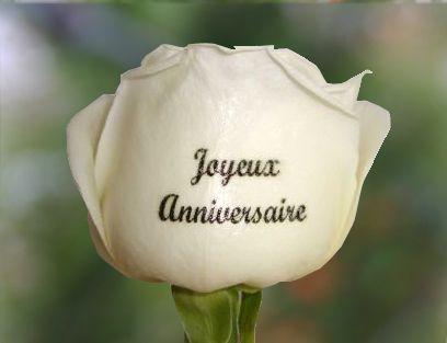 joyeux anniversaire...... Rose-j10