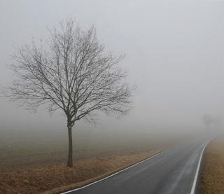 (МС) В тумане Edic10