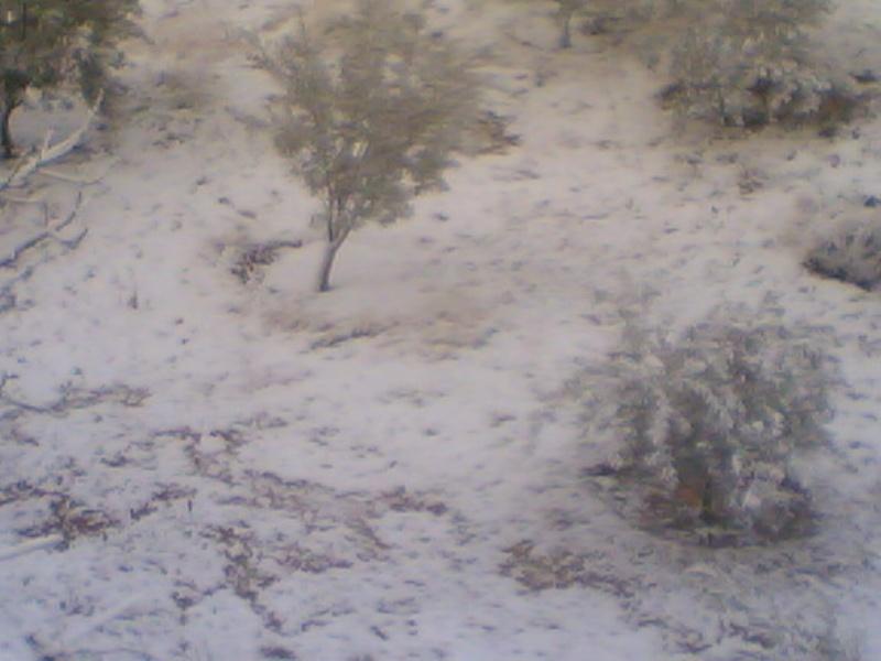 صور الثلج في حيان 31/01/2008 Image014