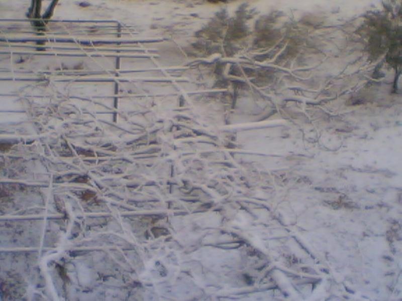 صور الثلج في حيان 31/01/2008 Image015