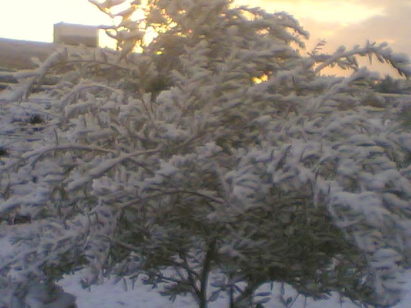 صور الثلج في حيان 31/01/2008 Image020