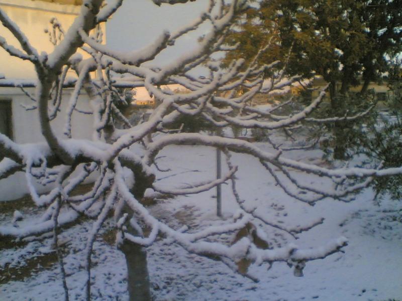 صور الثلج في حيان 31/01/2008 Image021