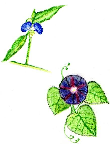 Competencia al DIBU Flores11