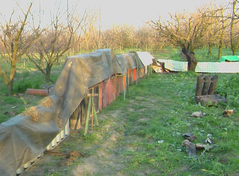 San Biagio a Mugnano (NA) Imga0716
