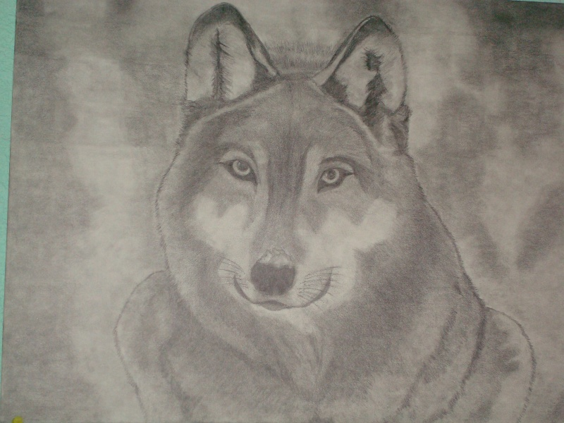 tus mejores imagenes - Página 2 Wolf10
