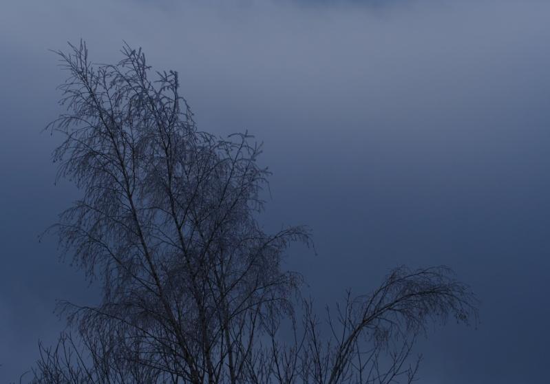 éclipse partielle depuis le Haut-Koeinigsbourg.67 Arbre_10