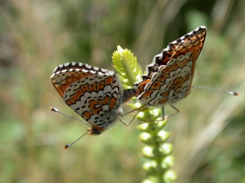papillons Dscn7010