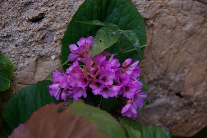 Floraisons de janvier Imgp2714