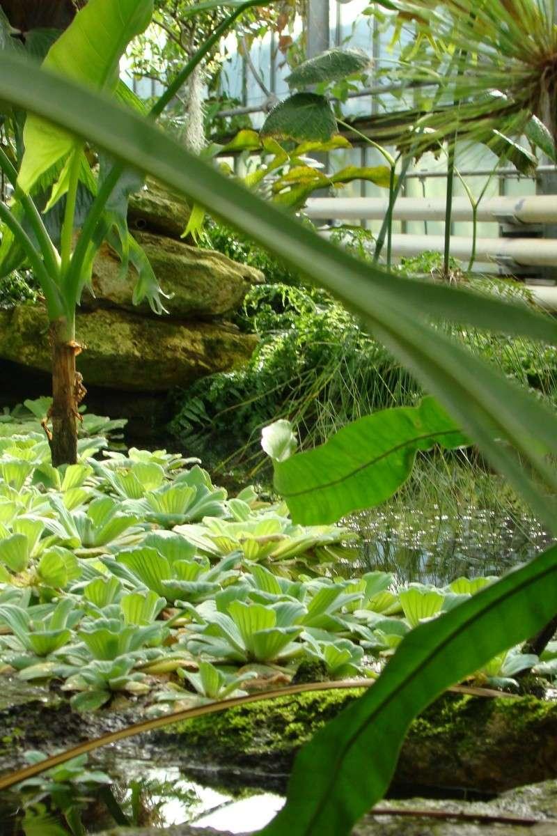 Visite des serres de l'Arboretum de Chevreloup Dsc01720
