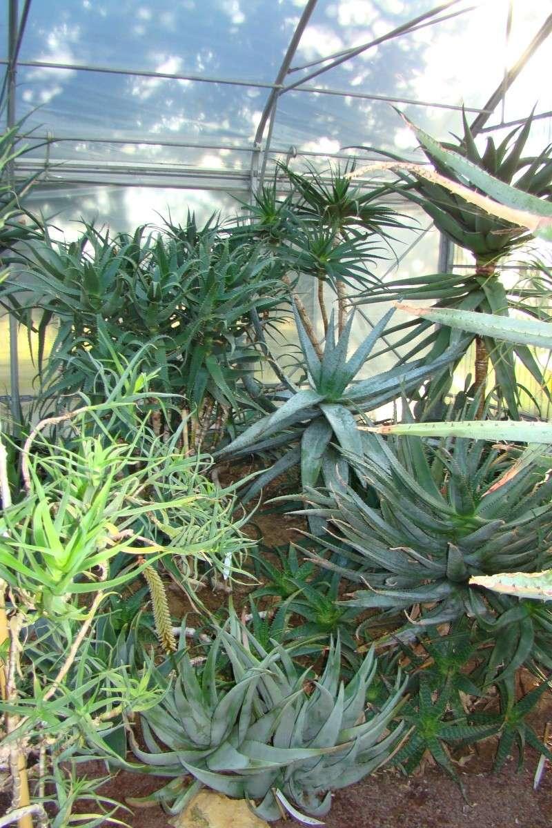 Visite des serres de l'Arboretum de Chevreloup Dsc01810