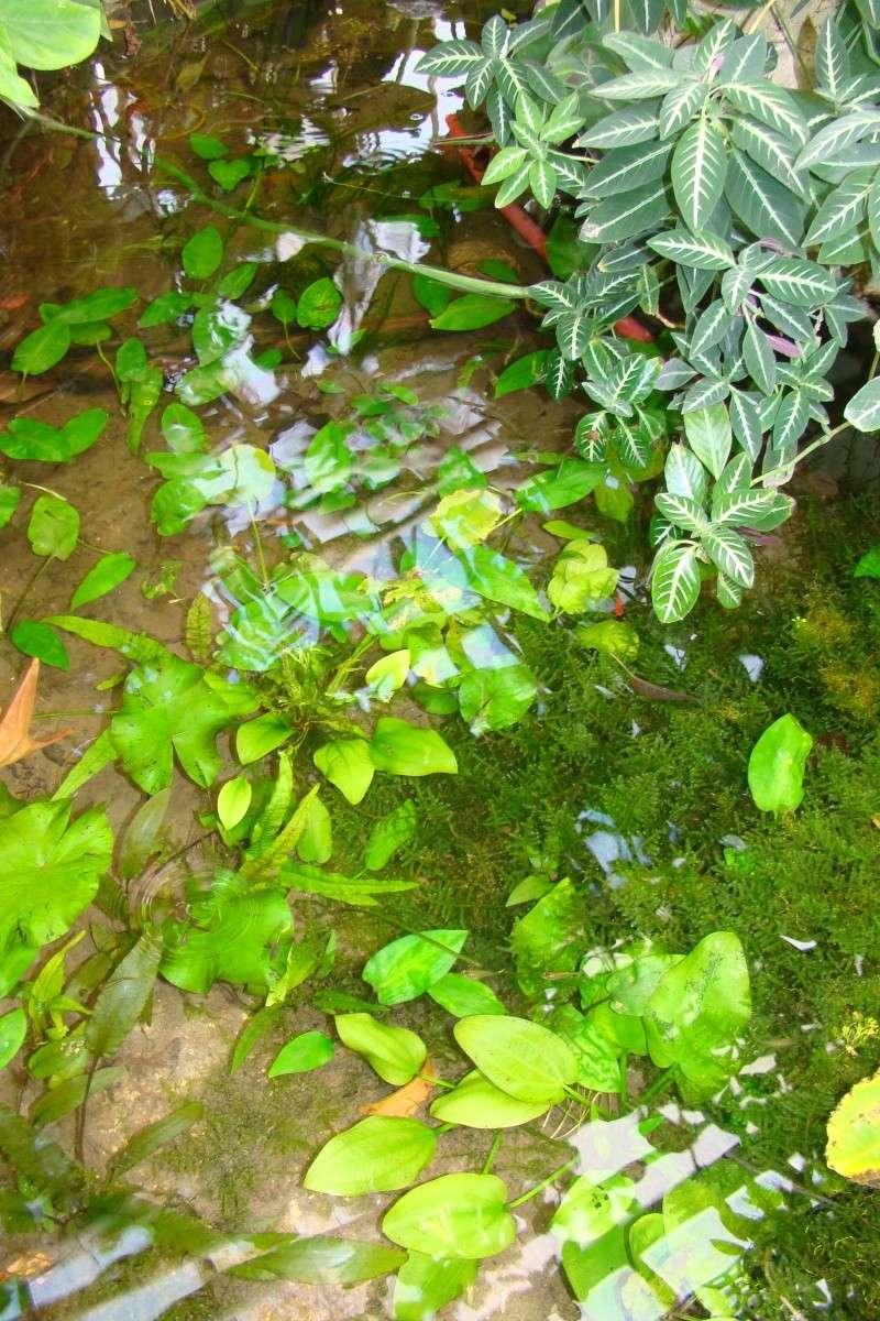 Visite des serres de l'Arboretum de Chevreloup Dsc01813