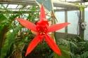 Visite des serres de l'Arboretum de Chevreloup Dsc01722