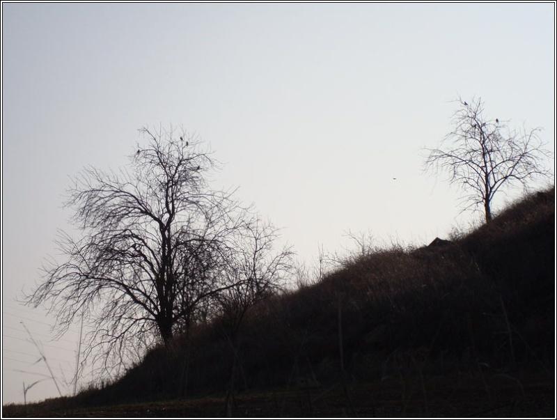 Divendres 22-02-08 La Segarra 1dsc0114