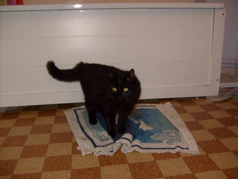 je vous présente mon chat Billy - Page 2 S6300215