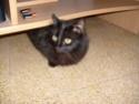 je vous présente mon chat Billy Billy211