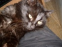 je vous présente mon chat Billy Billy214