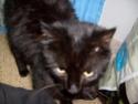 je vous présente mon chat Billy Billy215
