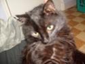 je vous présente mon chat Billy - Page 2 S6300211
