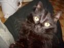 je vous présente mon chat Billy - Page 2 S6300212