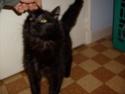 je vous présente mon chat Billy - Page 2 S6300213