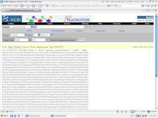 Nucleotide sequence retrieval from NCBI Ncbi_n10