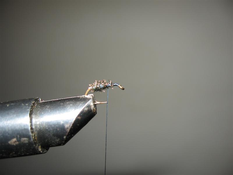 Black ant winged - mali crni mrav s krilima Img_1711