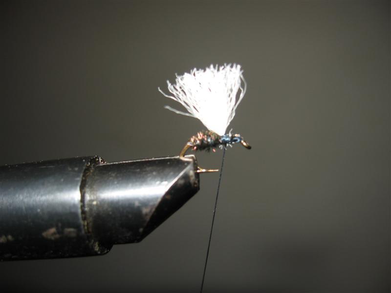 Black ant winged - mali crni mrav s krilima Img_1713