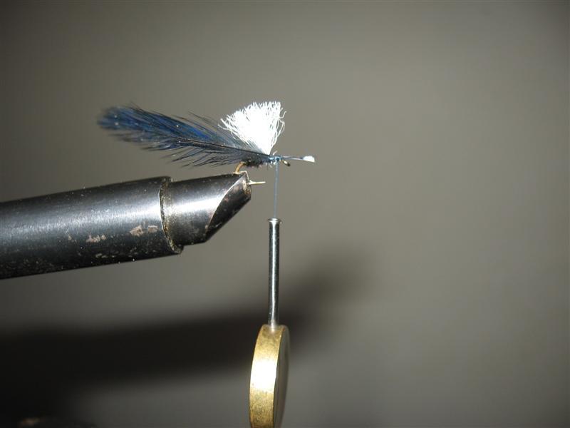 Black ant winged - mali crni mrav s krilima Img_1714