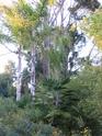 PARC OLBIUS RIQUIER(Hyeres-var-83) Parc_o28