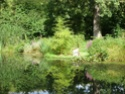 Phyllostachys vivax 'Aureocaulis' Jardin10