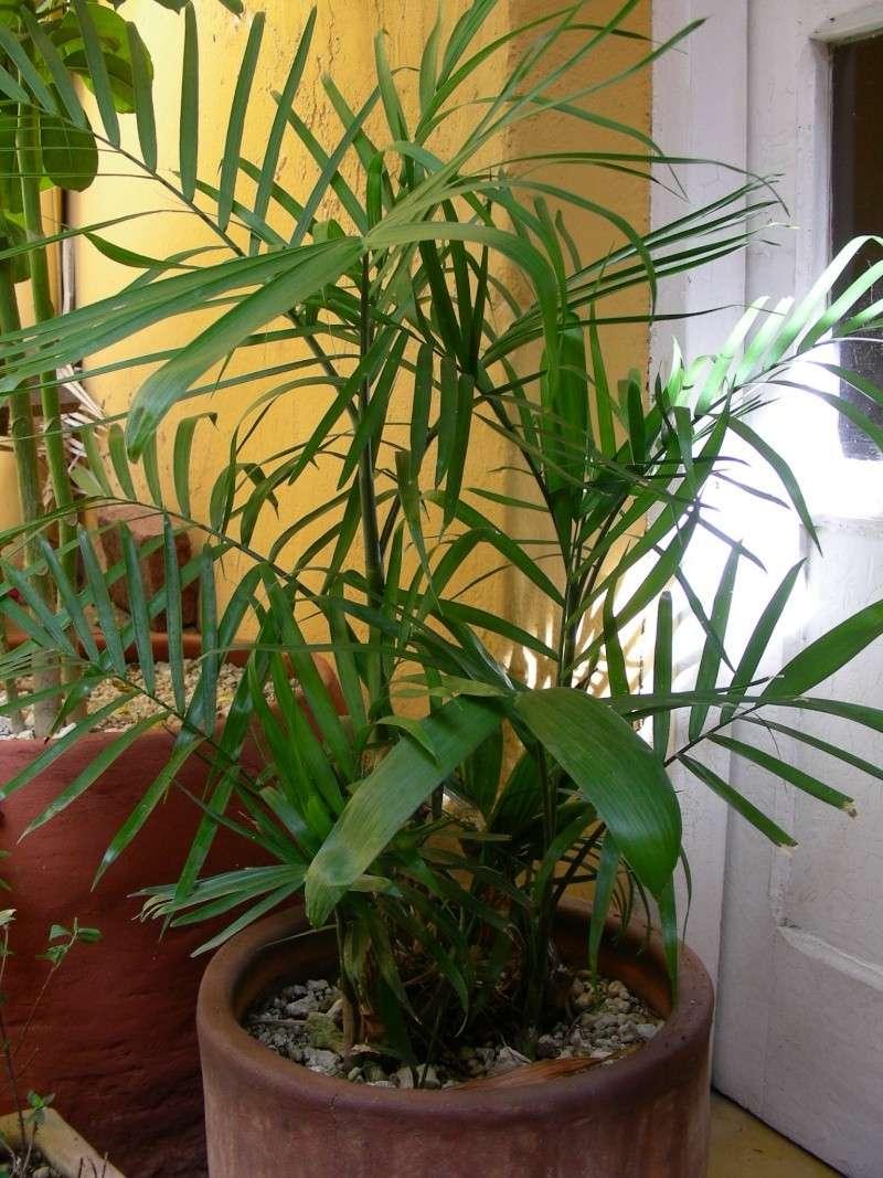 Quelle sorte de bambou ? Dscn4210