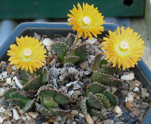 concours photo plantes  ... Aloino11
