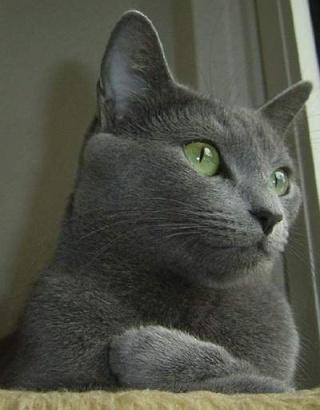 Fotografije mačaka Rm10