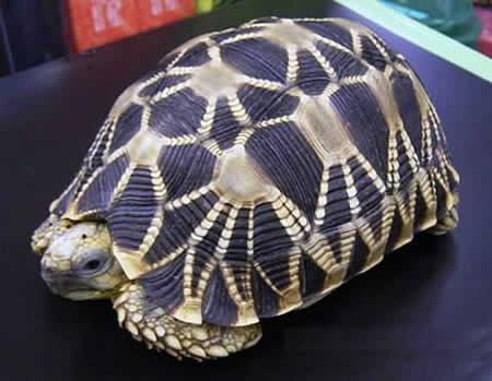 Una dificil...¿Sabeís el nombre de esta tortuga? Gt5g5t10