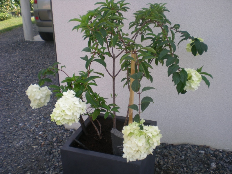 Blabla Jardinage (achats, déco, etc...) - (2) Coussi12