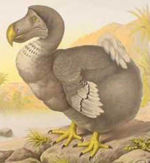 Le dodo 150px-10