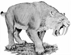 Le tigre à dents de sabre 250px-11