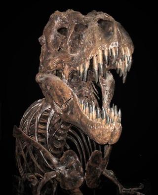 Le Tyrannosaure 485px-11