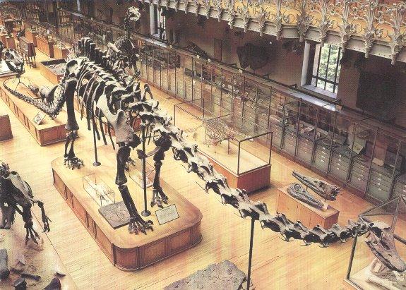 Le diplodocus Squele11