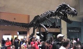 Le Tyrannosaure Tyrann12