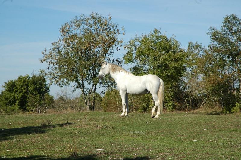 photos chevaux Dsc_0013