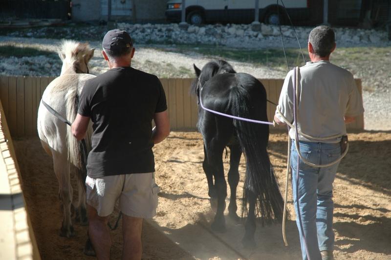 Ce qui est fait avec nos chevaux Dsc_0040