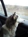 PRINCESSE - femelle husky 12 ans DECEDEE - Page 3 Covoit11