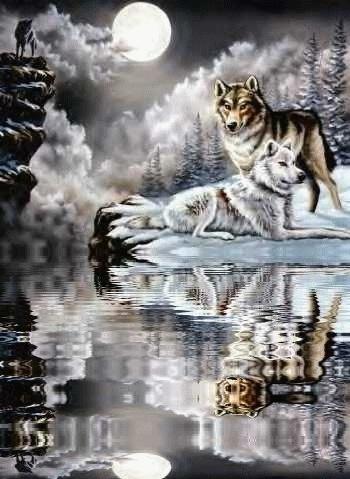 Les deux loups L24jz112