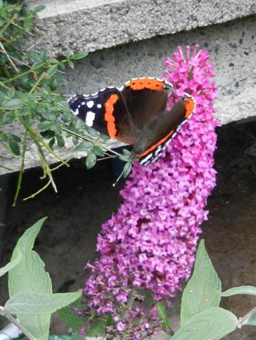 Fleurs de mon jardin 2012-910
